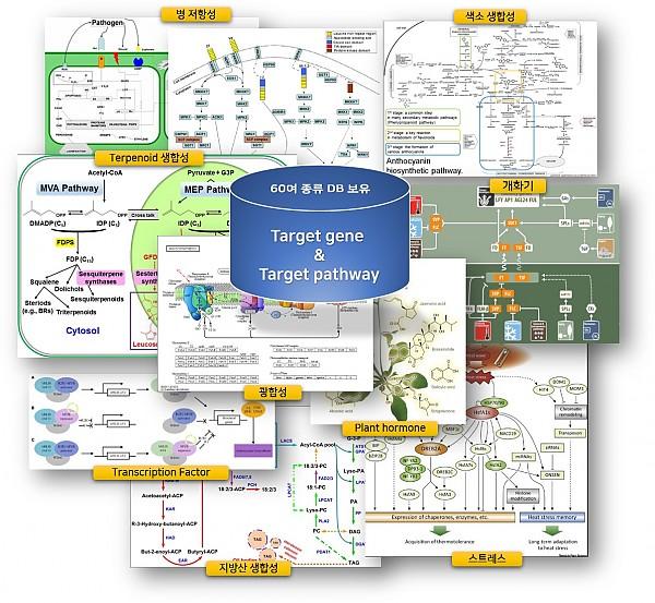Target gene & Target pathway