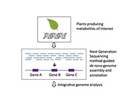 Large genome assembly