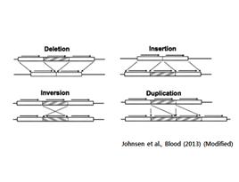 원품종과 돌연변이 계통 간의 Structural variation analysis