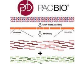RNAseq de novo assembly (Pacbio platform Iso-Seq.)