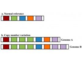 CNV  (Copy number variation)