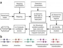 Deletion(DEL), Insertion(INS), Inversion(INV), Intrachromoso…