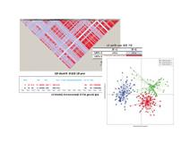 집단 유전체 분석