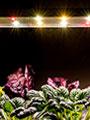 식물생장용 LED  구입 및 상담 우리텃밭 파쯔파쯔
